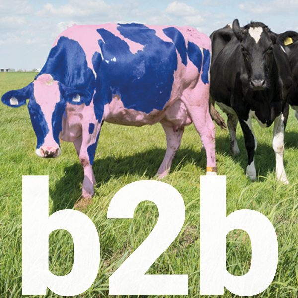 b2b say what cow icon