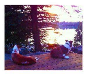sun set dogs